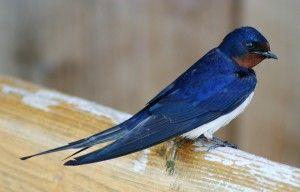 Grand Rapids Inbound Marketing Twitter Bird